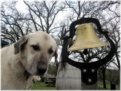 dog with bell