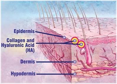 skin collagen hyaluronic acid