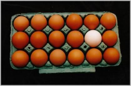 eggs in tray one white