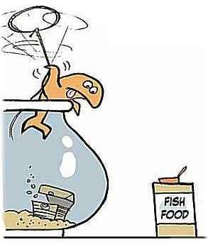 fishing getting food