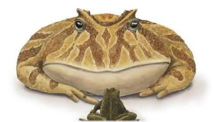 small toad in front of big toad