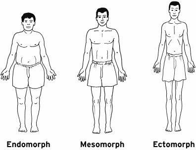 endomorph, mesomorph, ectomorph body types