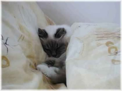 cat sleeping in bed.