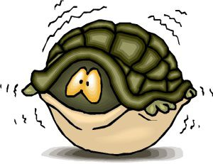 turtle scared in shell