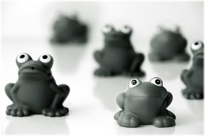 frogs looking up