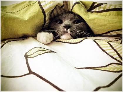 cat under bed cover