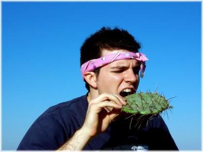 man eating cactus