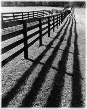 shadows from fence