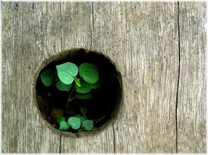 plant growing up through hole