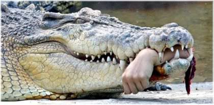crocodile with arm in mouth
