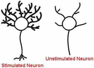 stimulated and unstimulated neurons