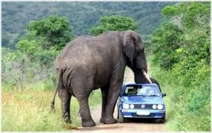 elephant car attack