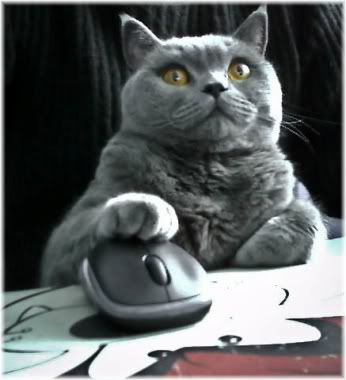 cat with paw on computer mouse