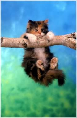 kitten hanging from branch