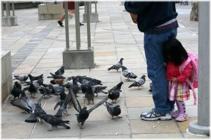 little girl hiding from pigeons