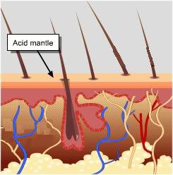 acid mantle layer